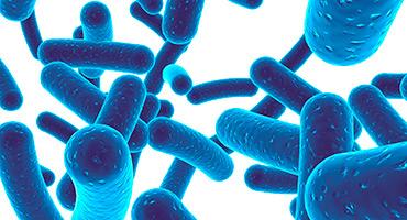 Qu'est-ce que la dysbiose intestinale ?